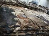 Factory wholesale cow / buffalo leather hide