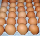 Farm Fresh Chicken Table Eggs / White & Brown Chicken Eggs/œufs de poule