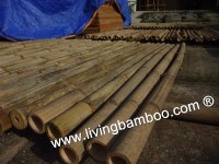 Bamboo Poles For Construction, Furniture, Gazebo, Tiki Bar